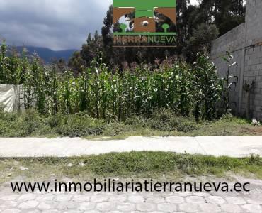 Se vende un hermoso lote con una área de terreno 700m2 con todos los servicios básicos (agua potable, luz y alcantarillado) ubicado a una cuadra de la panamericana en el centro de Otavalo. PRECIO: USD48.000  Para mayor información y ventas visítanos en nuestra oficina: INMOBILIARIA TIERRA NUEVA Dirección Otavalo, Calle Piedrahita Nº 4-31 y Bolívar. Teléfonos: fijo: (06) 2927429  /  (02) 21110999  /  0998481848  /  0980561293 Whatsapp:  593980247008 https://chat.whatsapp.com/HfA6fXdTBcq7LDQ4iW1esD Website: www.inmobiliariatierranueva.ec Email: info@inmobiliariatierranueva.ec OTAVALO - ECUADOR