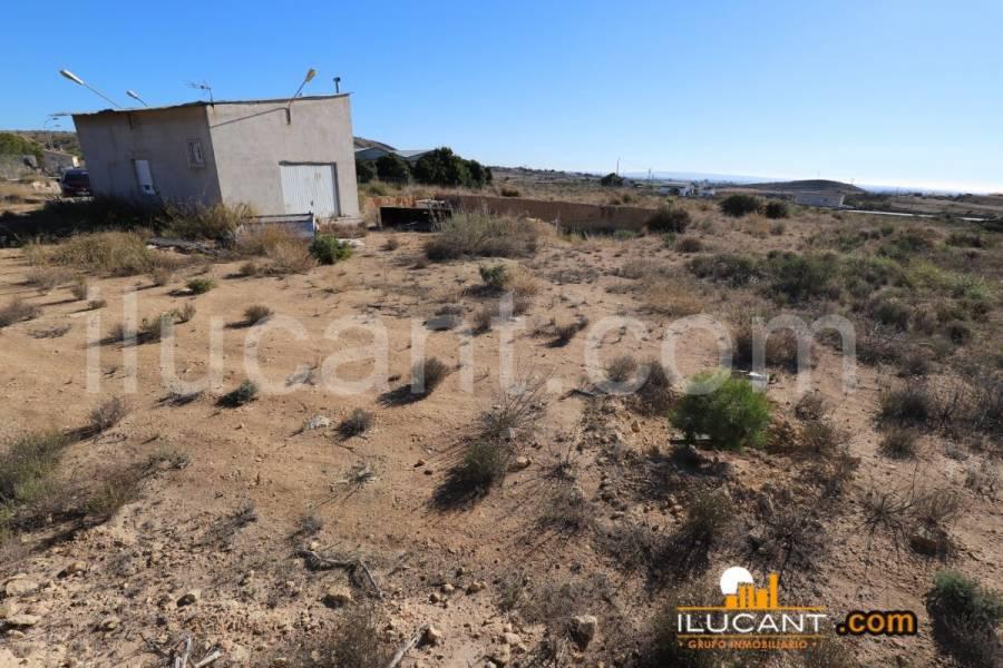 Elche,Alicante,España,Lotes-Terrenos,21803