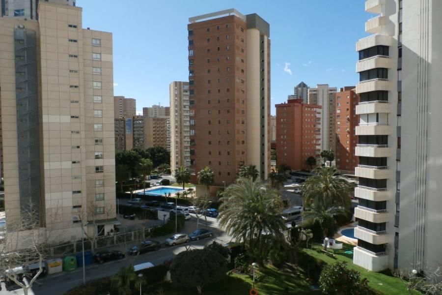 Benidorm,Alicante,España,1 Dormitorio Bedrooms,1 BañoBathrooms,Apartamentos,24289