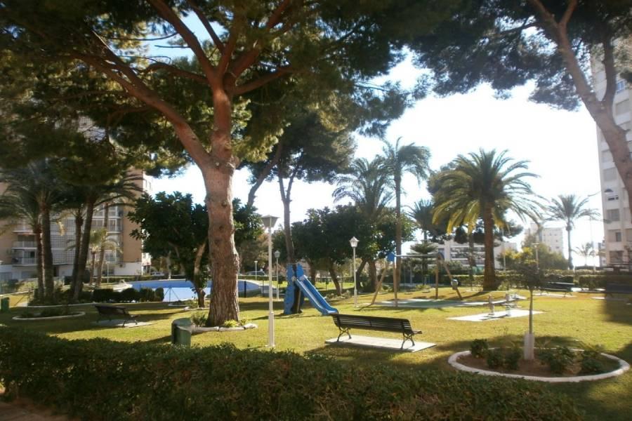Benidorm,Alicante,España,1 Dormitorio Bedrooms,1 BañoBathrooms,Apartamentos,24303