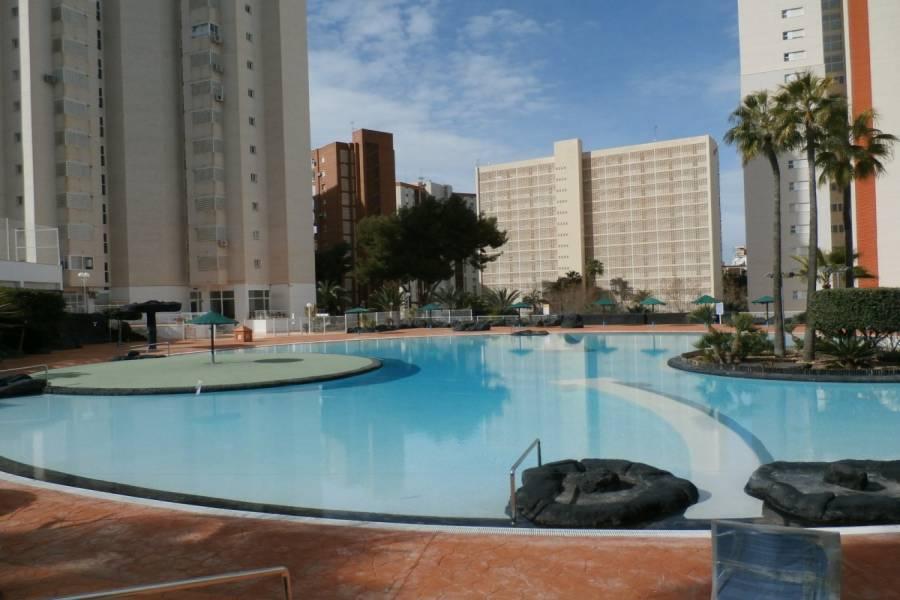 Benidorm,Alicante,España,1 Dormitorio Bedrooms,1 BañoBathrooms,Apartamentos,24338