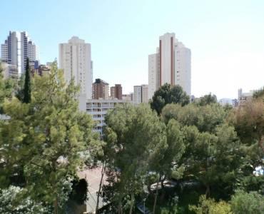 Benidorm,Alicante,España,1 Dormitorio Bedrooms,1 BañoBathrooms,Apartamentos,24339