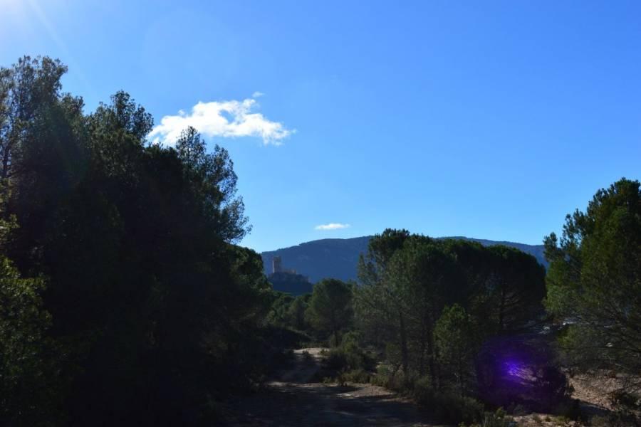 Biar,Alicante,España,Lotes-Terrenos,24472