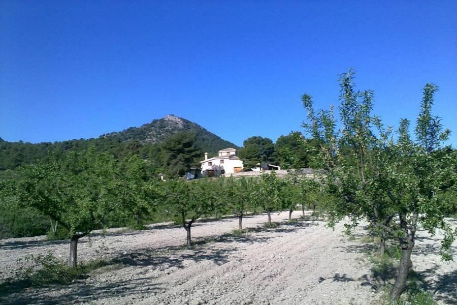 Castalla,Alicante,España,4 Bedrooms Bedrooms,4 BathroomsBathrooms,Lotes-Terrenos,24593