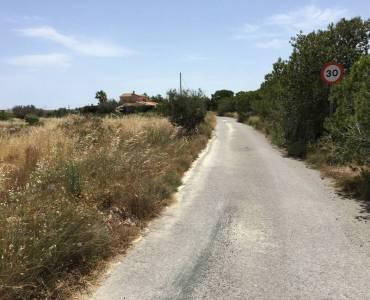 Elche,Alicante,España,Lotes-Terrenos,24787