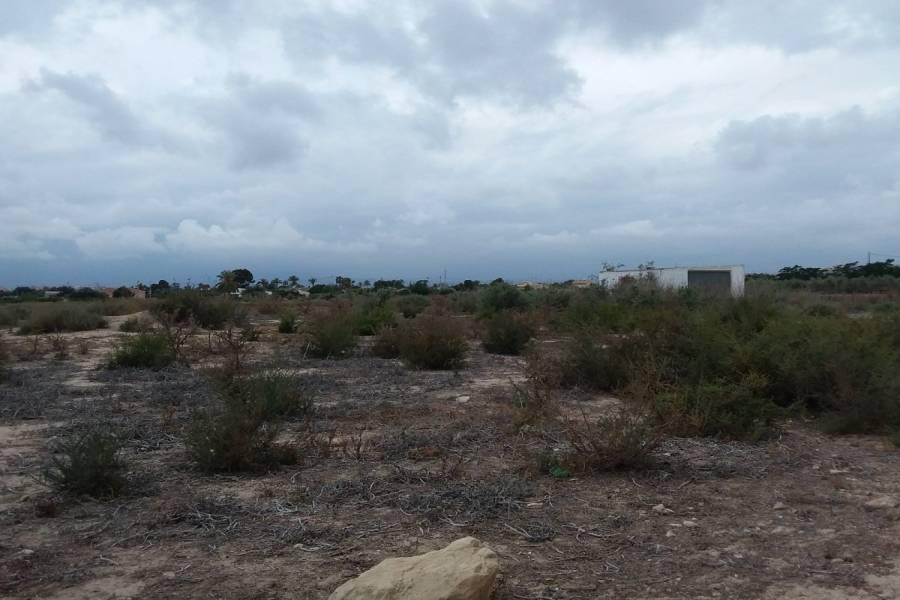 Elche,Alicante,España,Lotes-Terrenos,24966