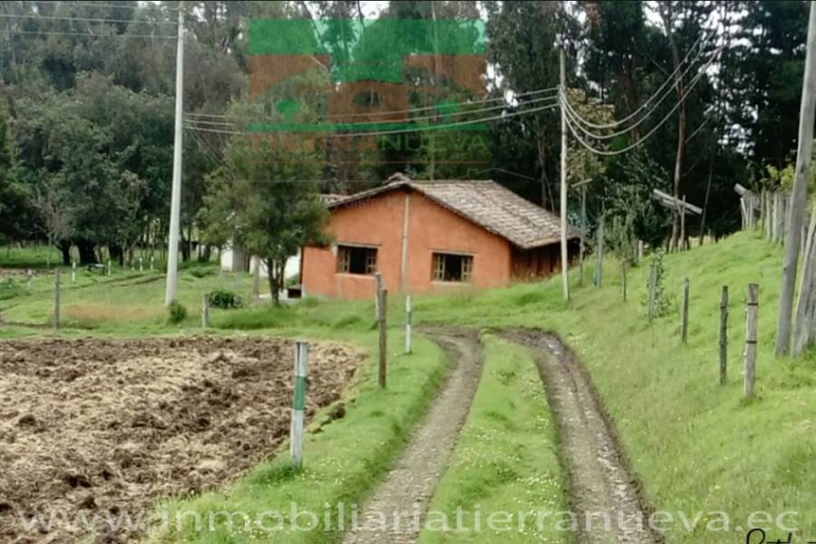 CAYAMBE,PICHINCHA,Ecuador,Lotes-Terrenos,3534