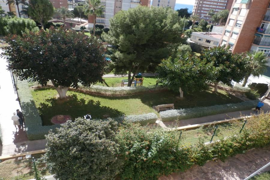 Benidorm,Alicante,España,1 Dormitorio Bedrooms,1 BañoBathrooms,Apartamentos,34055