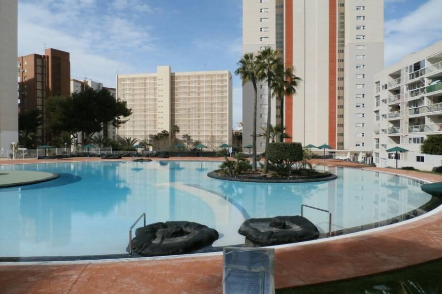 Benidorm,Alicante,España,1 Dormitorio Bedrooms,1 BañoBathrooms,Apartamentos,34108
