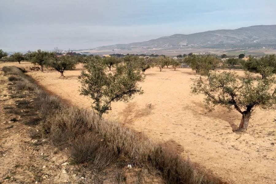 Cañada,Alicante,España,Parcela,34253