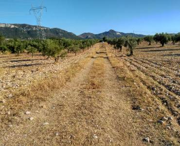 Biar,Alicante,España,Parcela,34261