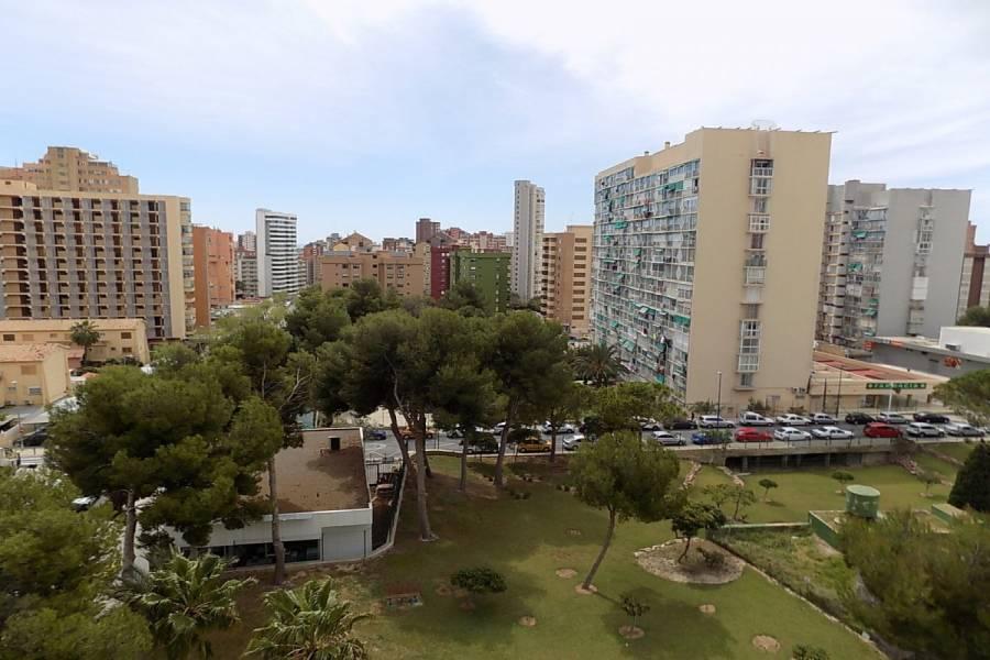 Benidorm,Alicante,España,1 Dormitorio Bedrooms,1 BañoBathrooms,Apartamentos,34554