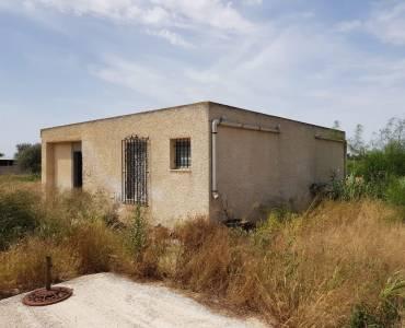 Elche,Alicante,España,Casas,34809