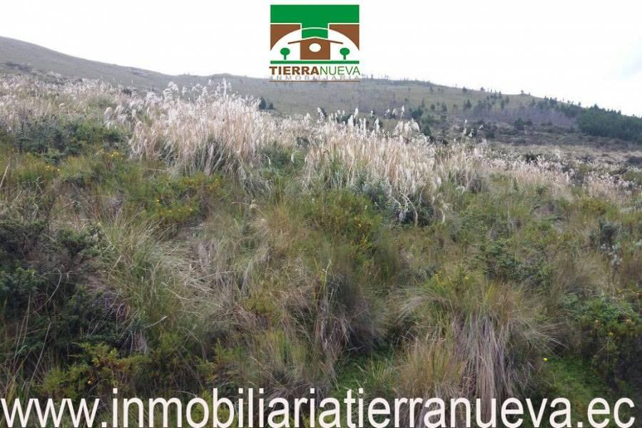 """Propiedad de 12 hectáreas ubicada en Cayambe en el sector de Turupamba apta para cabañas con una altitud de 3600msnm tiene ojos de agua. A 4000 por hectárea   Con una vista espectacular al Nevado Cayambe y a sus alrededores.  PRECIO: 60.000 NEGOCIABLEPara mayor información y ventas visítanos en nuestra oficina:  INMOBILIARIA TIERRA NUEVA Dirección Cayambe, Av. Natalia Jarrín y Bolívar – Paseo Comercial """"El Redondel"""" Local #20  Teléfonos: fijo: (02) 2111 9 Whatsapp:  593980247008 https://chat.whatsapp.com/HfA6fXdTBcq7LDQ4iW1esD Email: cayambe@inmobiliariatierranueva.ec Website: www.inmobiliariatierranueva.ec CAYAMBE–ECUADOR"""