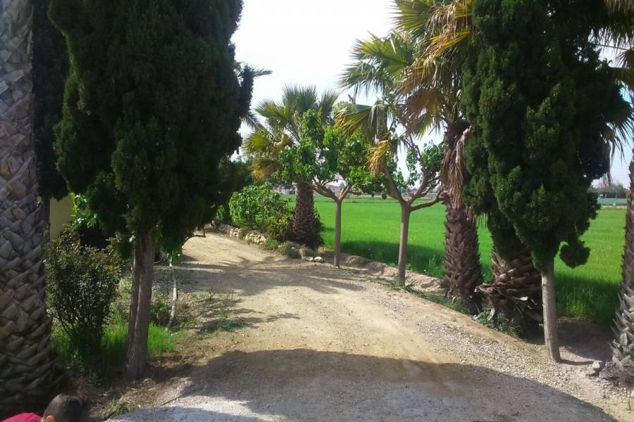 Catral,Alicante,España,Lotes-Terrenos,39924