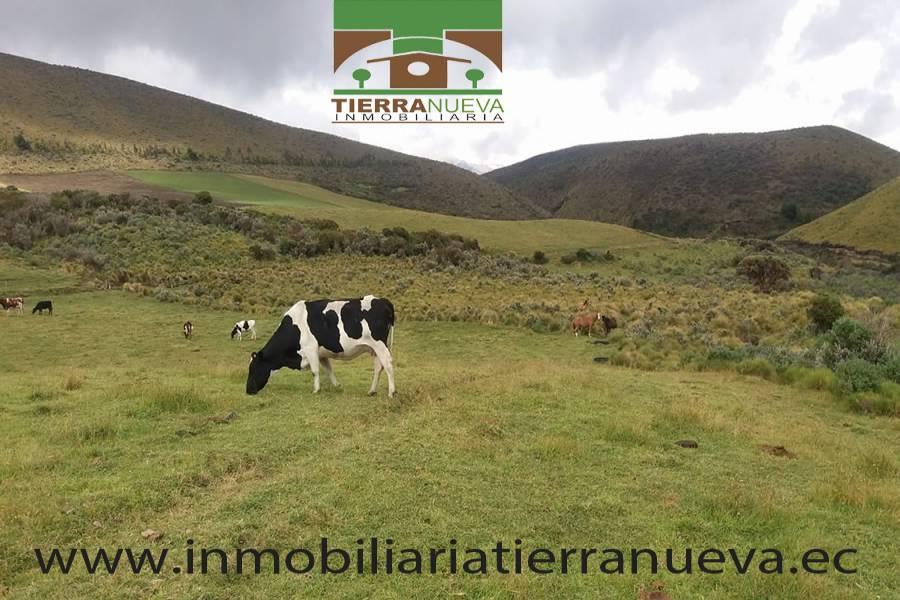 """La  hacienda se encuentra ubicada a una hora desde el centro de Cayambe vía al nevado , a una altitud de 3600 msnm, la propiedad dispone de 45 hectáreas planas y semiplanas, tiene agua de riego, una casa para el cuidador, bodega, pesebreras  para los terneros  ,dispone de ordeño mecánico de cuatro puestos, tanque frio de 1000 litros de capacidad, tiene 50 cabezas de ganado de  las cuales 35 están en producción de leche,  la producción diaria es de 200 litros al día  la raza de las vacas  son f1  la producción le retira la empresa Dulac de la hacienda .  La propiedad posee una calidad  de tierra excelente y además se encuentra rodeado de hermosas paisajes lo que permitiría ser una gran acogida para el turismo ya que se encuentra cerca  al nevado.Para mayor información y ventas visítanos en nuestra oficina:  INMOBILIARIA TIERRA NUEVA Dirección Cayambe, Av. Natalia Jarrín y Bolívar – Paseo Comercial """"El Redondel"""" Local #20  Teléfonos: fijo: (02) 2111 9 Whatsapp:  593980247008 https://chat.whatsapp.com/HfA6fXdTBcq7LDQ4iW1esD Email: cayambe@inmobiliariatierranueva.ec Website: www.inmobiliariatierranueva.ec CAYAMBE–ECUADOR"""