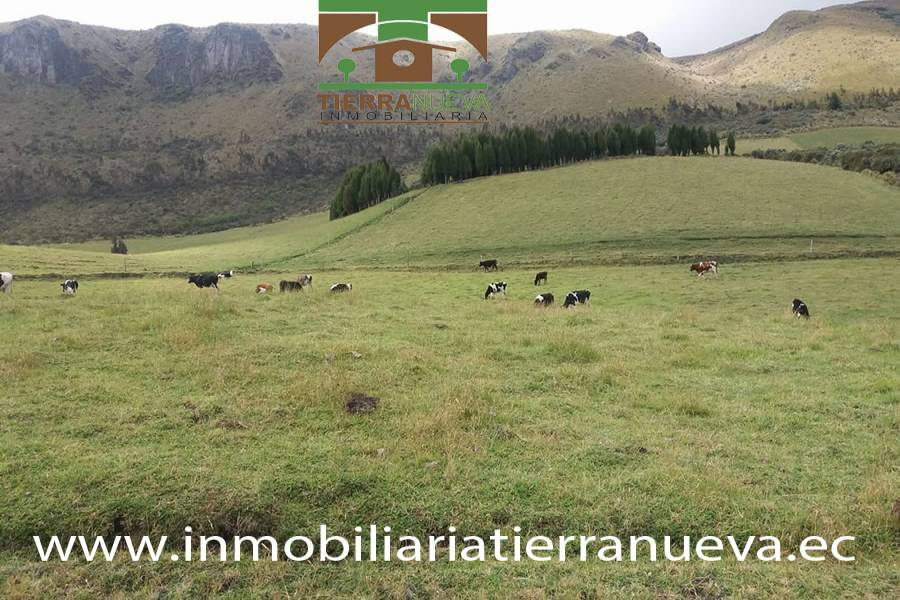 """La  hacienda se encuentra ubicada a una hora desde el centro de Cayambe vía al nevado , a una altitud de 3600 msnm, la propiedad dispone de 45 hectáreas planas y semiplanas, tiene agua de riego, una casa para el cuidador, bodega, pesebreras  para los terneros  ,dispone de ordeño mecánico de cuatro puestos, tanque frio de 1000 litros de capacidad, tiene 50 cabezas de ganado de  las cuales 35 están en producción de leche,  la producción diaria es de 200 litros al día  la raza de las vacas  son f1  la producción le retira la empresa Dulac de la hacienda .  La propiedad posee una calidad  de tierra excelente y además se encuentra rodeado de hermosas paisajes lo que permitiría ser una gran acogida para el turismo ya que se encuentra cerca  al nevado. Para mayor información y ventas visítanos en nuestra oficina:  INMOBILIARIA TIERRA NUEVA Dirección Cayambe, Av. Natalia Jarrín y Bolívar – Paseo Comercial """"El Redondel"""" Local #20  Teléfonos: fijo: (02) 2111 9 Whatsapp:  593980247008 https://chat.whatsapp.com/HfA6fXdTBcq7LDQ4iW1esD Email: cayambe@inmobiliariatierranueva.ec Website: www.inmobiliariatierranueva.ec CAYAMBE–ECUADOR"""
