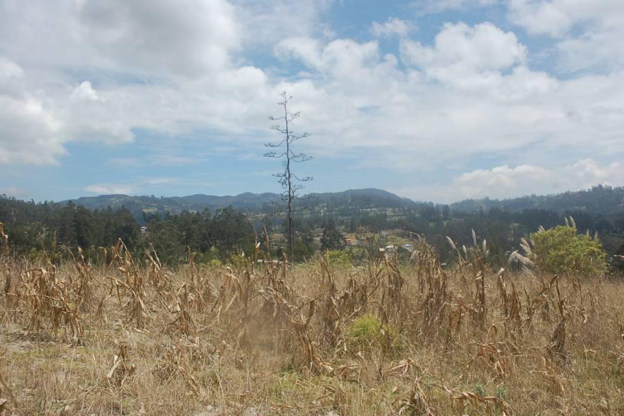 Deleg, CAÑAR, Ecuador, ,Lotes-Terrenos,Venta,1,42006