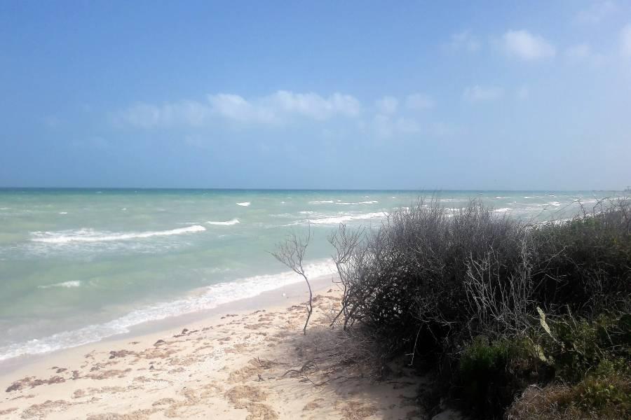 SISAL, Yucatán, Mexico, ,Lotes-Terrenos,Venta,42290