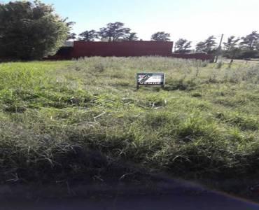 TRENQUE LAUQUEN, Buenos Aires, Argentina, ,Lotes-Terrenos,Venta,Baldovino entre Castelli y Almafuerte,42650