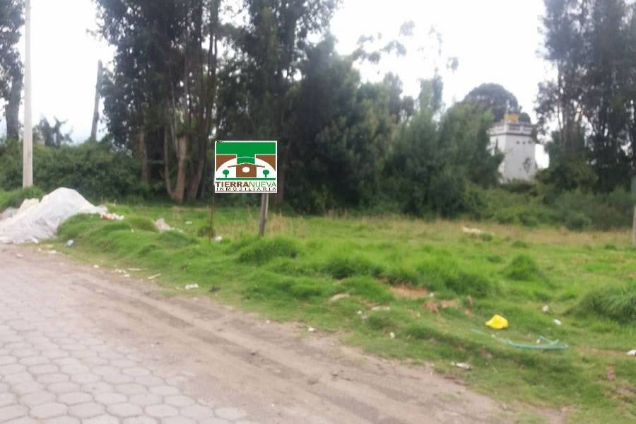 CAYAMBE,PICHINCHA,Ecuador,Lotes-Terrenos,5288