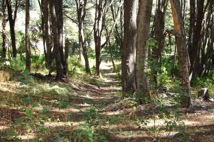 Villa La Angostura,Neuquén,Argentina,Lotes-Terrenos,Ruta 40,5365