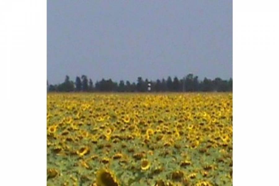 Pampa del Infierno,Chaco,Campos,Ruta 16 ,1457