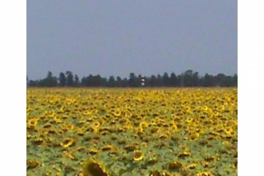 Pampa del Infierno,Chaco,Campos,Ruta 16,1480