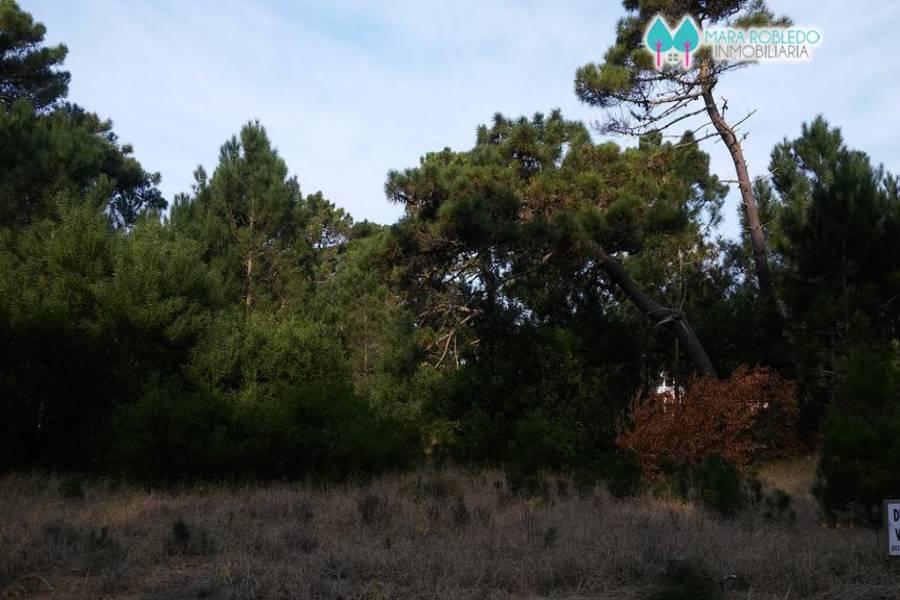 Pinamar,Buenos Aires,Argentina,Lotes-Terrenos,LOS ALAMOS,5844