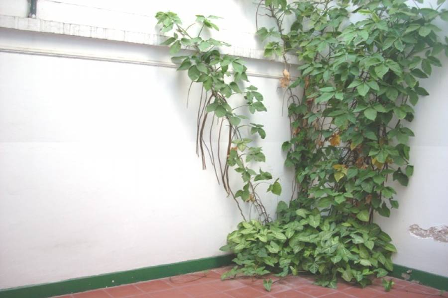Flores,Capital Federal,Argentina,2 Bedrooms Bedrooms,1 BañoBathrooms,PH Tipo Casa,BACACAY,6351