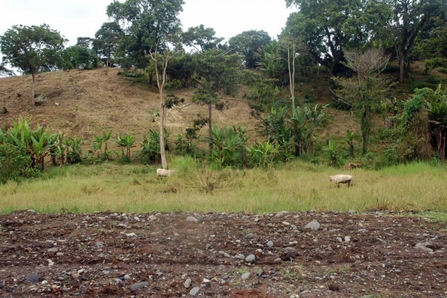 MACAS,MORONA SANTIAGO,Ecuador,Lotes-Terrenos,6527