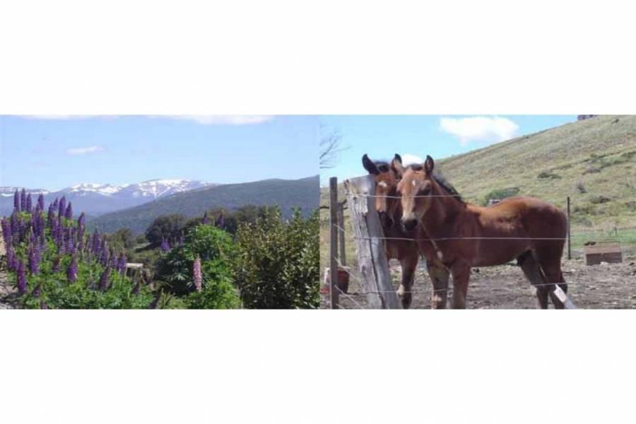 San Martin de los Andes,Neuquén,Campos,Ruta 234,1642