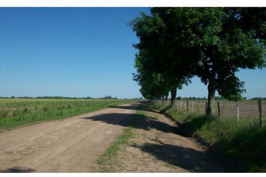 Ibarlucea,Santa Fe,Campos,Ruta 34,1643